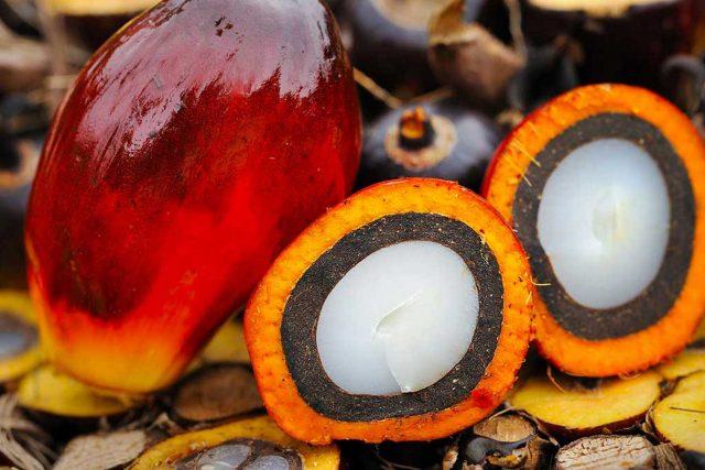 Palmiye Yağı Zararları