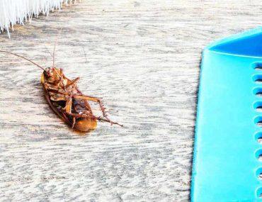 Hamam Böceklerinden Kurtulmanın Yolları