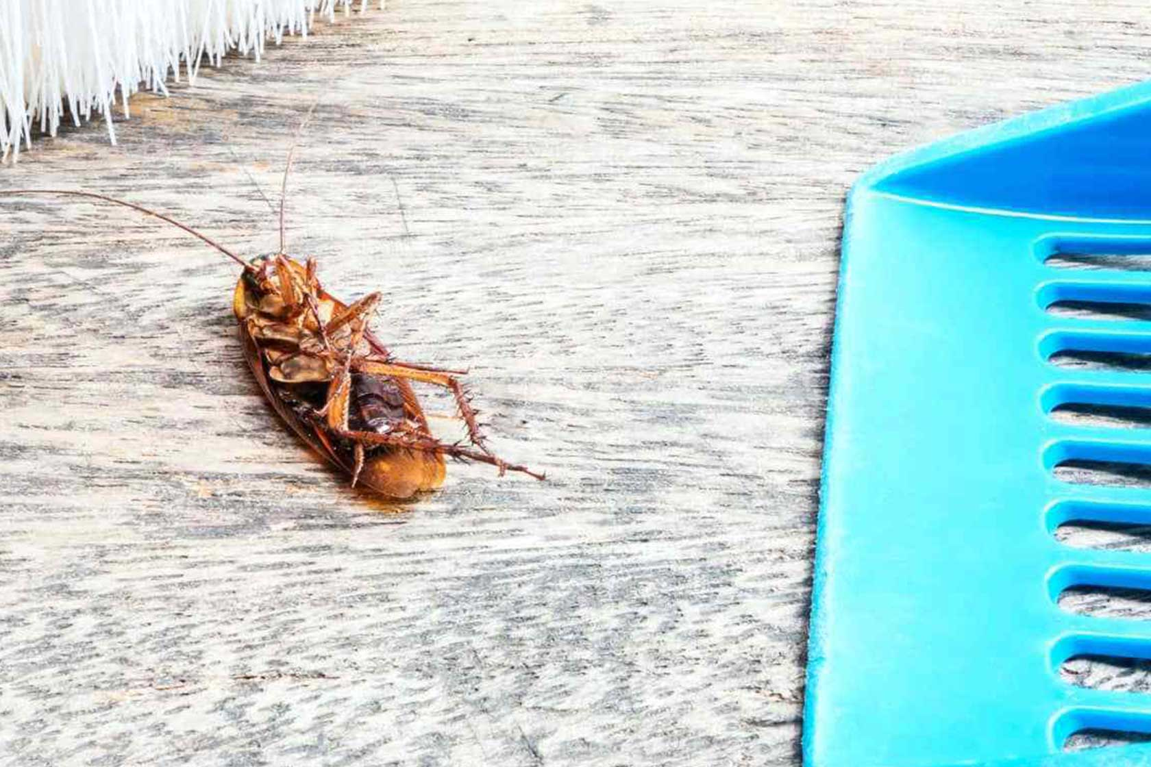 Böceklerden kurtulmanın yolları